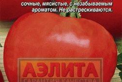 Буденовка - Аэлита