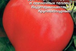 Буденовка - Плазмас