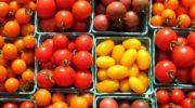 Самые сладкие сорта томатов - обзор
