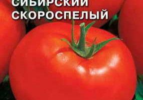 Сибирский скороспелый Седек