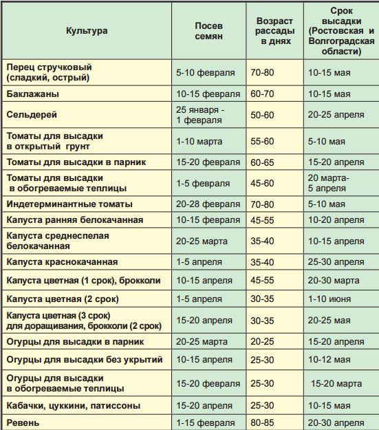 Срок посева семян и высадки рассады для юга России