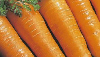 Витаминная морковь - фото