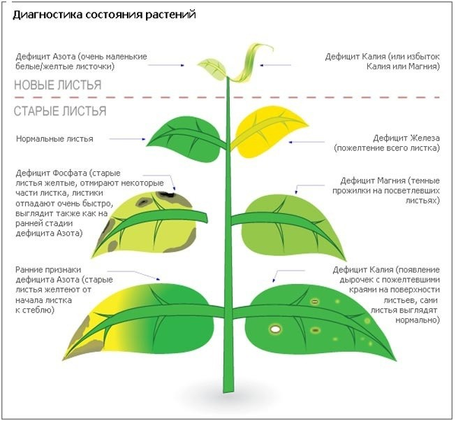Диагностика состояния растения