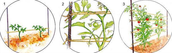 Горязонтальное подвязывание томатов