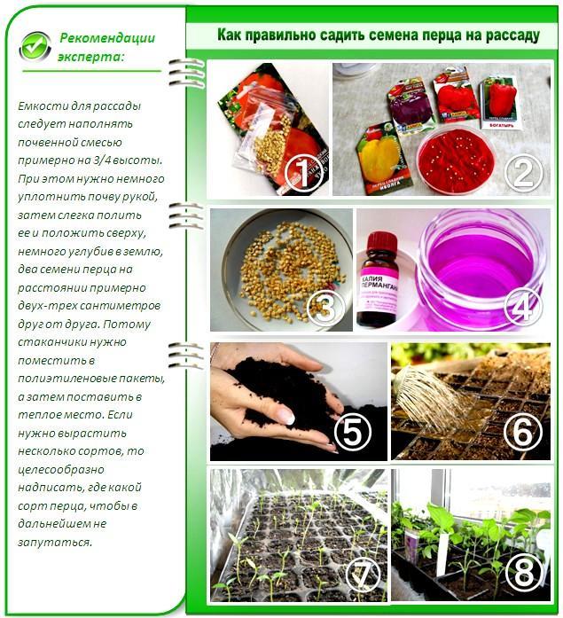 Как правильно сажать семена перца на рассаду