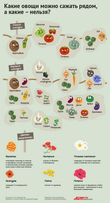 Какие овощи можно сажать рядом, а какие нельзя