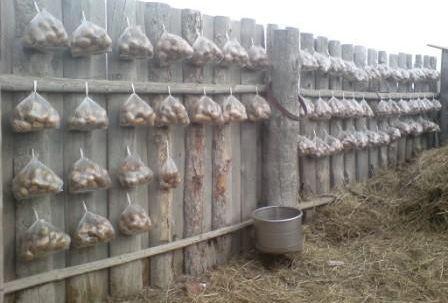 Картофель в пакетах на проращивание