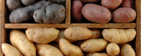 Классификация сортов картофеля