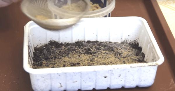 Песок от плесени на рассаде