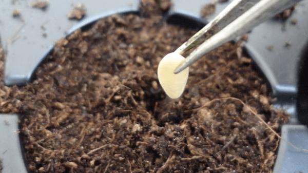 Когда сажать огурцы на рассаду и в грунт в 2018 году и как это делать