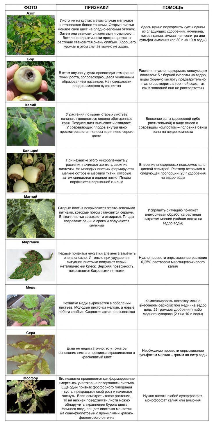 Признаки недостатков микроэлементов у томатов