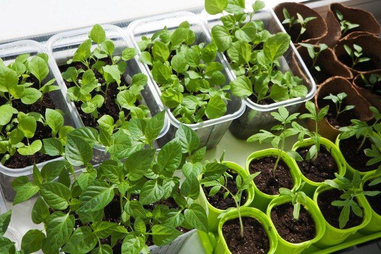 Овощи для выращивания дома 99