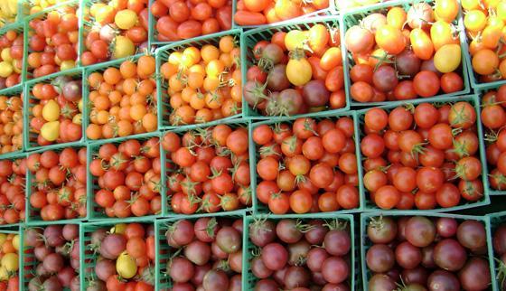 Сортовое разнообразие помидоров