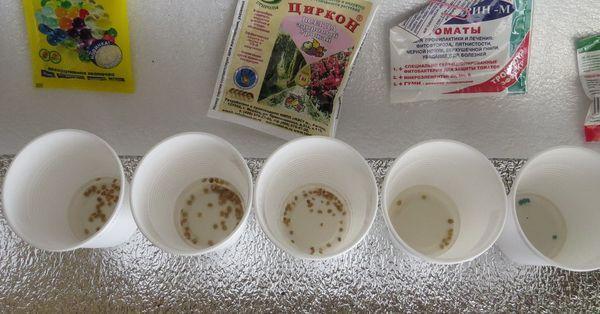 Замачивание семян в стакане