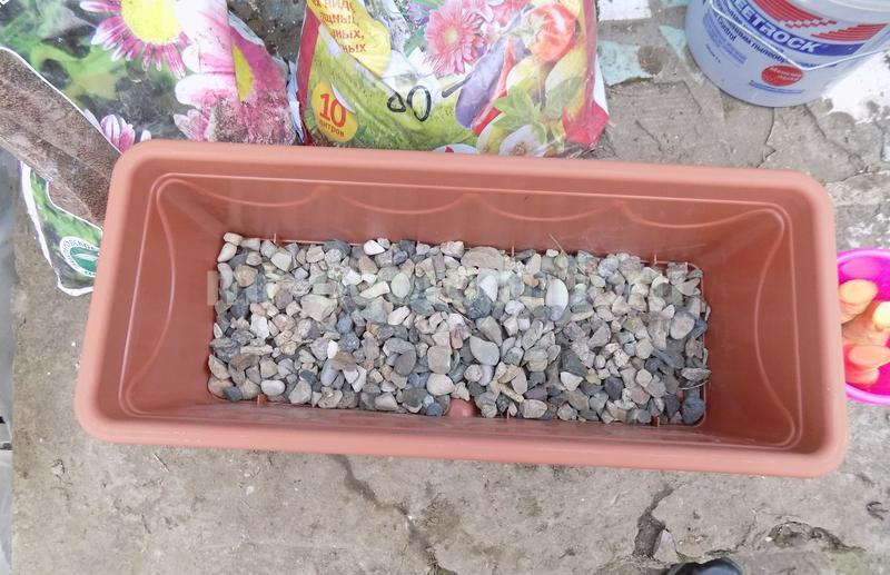 Емкость для выращивания имбиря с дренажем