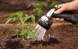 Как поливать рассаду томатов