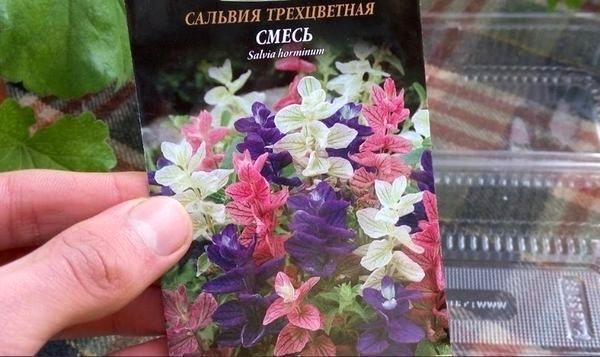 Пакетик с семенами сальвии
