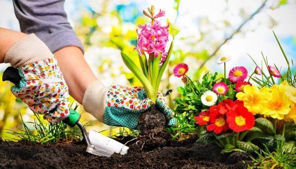 Работы в саду и огороде по зодиаку