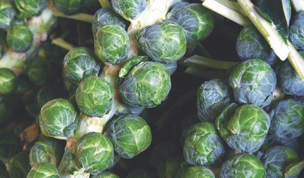 Ранние сорта брюссельской капусты