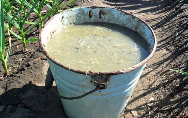 Удобрение из навоза для подкормки цветной капусты