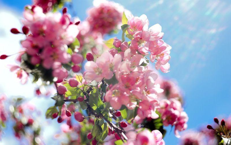 Лунный посевной календарь на май