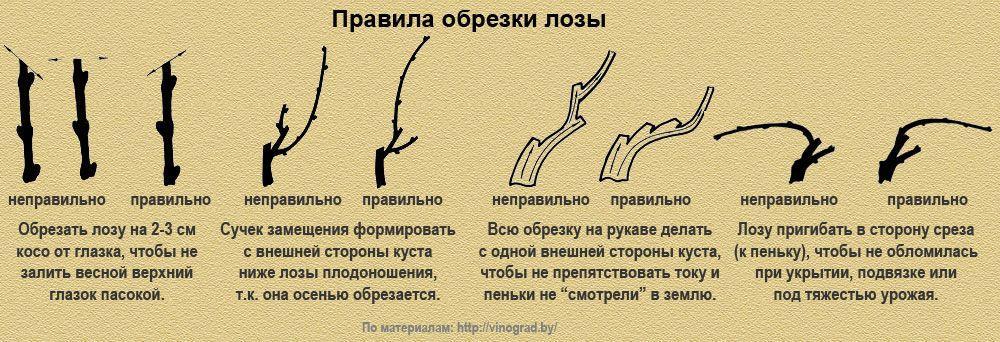 Правила обрезки лозы
