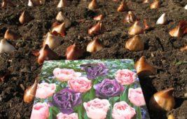 Когда сажать тюльпаны осенью