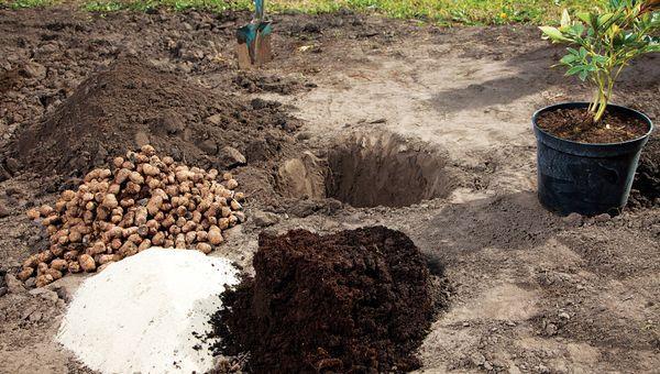 Подготовка земли для пиона