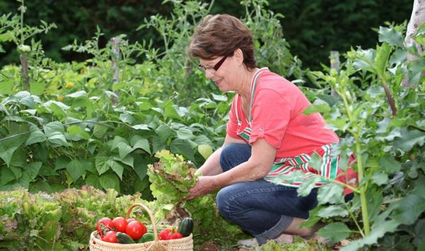 Работы в огороде в августе