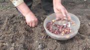 Посадка лука под зиму - сроки посадки и как правильно это делать