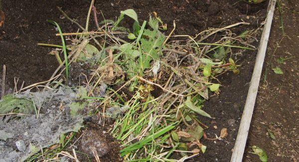 Удаление растительных остатков в теплице