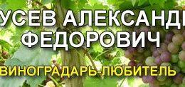 Гусев Александр Федорович, виноградарь-любитель
