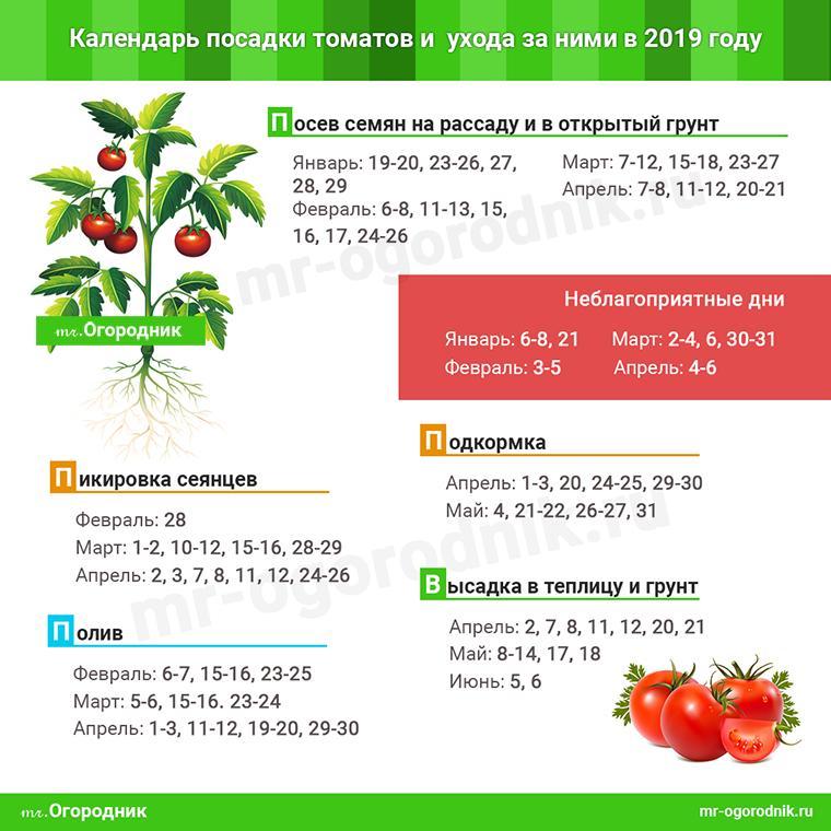Календарь посадки томатов в 2019 году