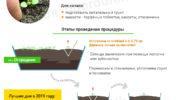 Инфографика: пикировка петунии