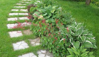 Хоста, цветник в природном стиле