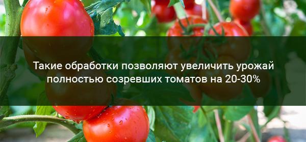 Эффективность подкормки помидоров йодом