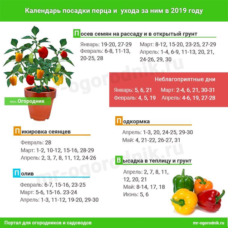 Инфографика: Календарь посева перца на рассаду в 2019 году