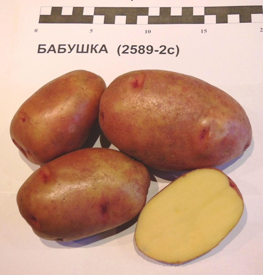 Картофель Бабушка