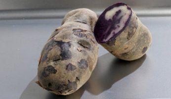Картофель Северное сияние