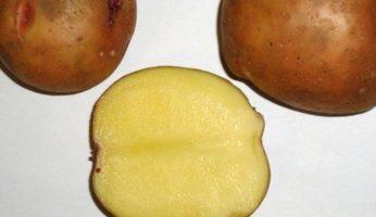 Картофель Смоляночка