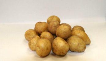 Картофель Златка