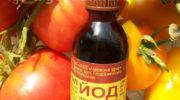 Подкормка томатов йодом - две точки зрения на эффективность и рецепты