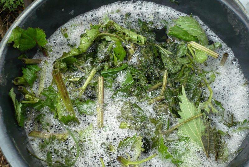 Травяной настой для подкормки