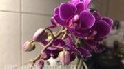 Как ухаживать за орхидеей в осенне-зимний период