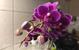 Уход за орхидеей осенью и зимой