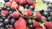 Делится читательница: лучшие рецепты жидких удобрений для садовой земляники