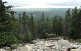 Что и когда сажать на Урале