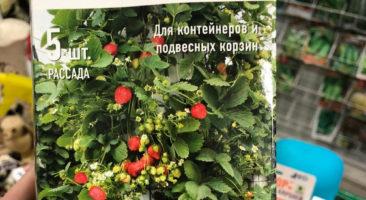 Клубника Гирлянда - упаковка с рассадой
