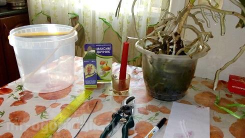 Инструменты для пересадки орхидеи