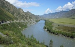 Сроки посадки рассады в Сибири